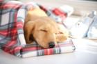 犬の体温が低い原因について 危険性と対処法など