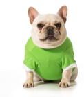 洋服を着せると固まる犬の心理とは?