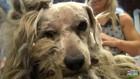 ホームレスだったベンジーは保護され、見違える程の変貌を遂げた!