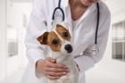 犬が採血をするときに飼い主にできること