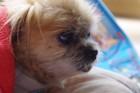 愛犬との16年。闘病の日々と後悔していること。