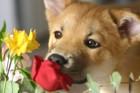 犬が興味を示しているときに見せる6つの仕草