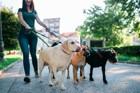 大型犬のリードおすすめ6選!散歩がもっと楽しくなる選び方