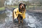 「犬にレインコートを着せないで!」・・・科学者の叫びには理由があった