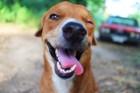 犬が毎日楽しみにしていること7選