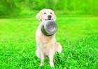愛犬がごはんを食べたあとなのに欲しがる4つの理由