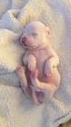 生れたばかりの子犬、スヤスヤ眠る姿はまさに天使の寝顔(動画)