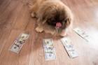 犬は実はお金好き?犬がお金に囲まれている画像15選