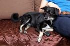 犬はテレビにうつった犬を区別できる?