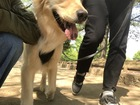 犬の舌に現れる舌斑について