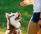 愛犬のトレーニングやしつけに最適な「ごほうび」とは?