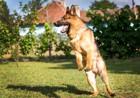 犬が元気すぎる時に気を付けたい4つの事と落ち着いてもらう方法