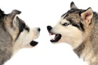 犬が唸る行動は問題である場合と状況によって問題ない場合があるのを知っていますか?