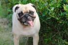 犬の唾液から分かる病気7つ