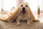 犬は冬でも熱中症になる?!原因と対策