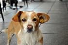 愛犬が急に吠えなくなった!考えられる原因や改善方法