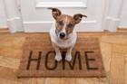 お留守番が苦手な犬の特徴3選