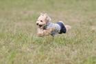 犬が興奮している時に見せる5つの行動