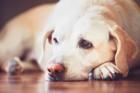 犬が遠慮するタイミング6つ