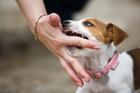 犬に噛まれたことでかかる破傷風について 症状と予防法