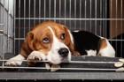 犬をケージで飼う時の注意点7つ