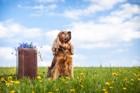 犬を土葬するときに気を付けるべき5つのこと