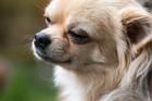 熊本地震で保護された犬たち、新しい飼い主の元へ