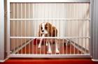 犬をペットホテルに預けると、ストレスになるって本当?