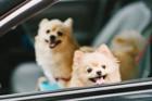 犬と車で安全にお出かけするためのポイント5つ