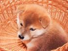 犬が呼んでも来ない!無視される8つの理由 しつけ方と対処法