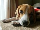 犬用ステップの使い方や選び方、おすすめ商品まで