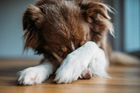 犬の『不安度』チェック項目5つ