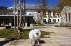河口湖の新名所、愛犬と一緒に楽しめる富士大石ハナテラス