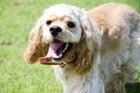 犬のグループ一覧!10種類の特徴と飼うときの注意点