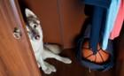 犬には幽霊が見える?ワンコの不思議な『4つの行動』