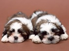 犬の治療費が高額化!飼い主が事前にできることは?