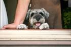 犬を飼うべきではない人の5つの特徴