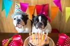 犬が喜ぶ誕生日の祝い方!バースデーケーキのレシピやプレゼント用グッズ