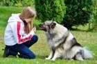 犬にしつけをしないことにより起こる4つのリスク