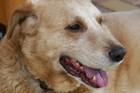 犬の老衰 その症状と必要な介護について