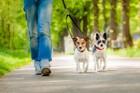 犬との散歩がもっと楽しくなる3つの工夫