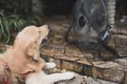 犬用クールマットの種類とおすすめの商品5選