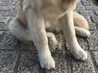 犬の股関節形成不全について 症状から予防、治療方法まで