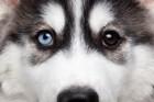 見た目が印象的な犬種9選