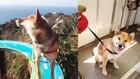 愛犬と山に行きたいけど…犬連れ登山は賛否両論!?