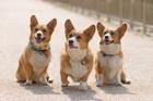 犬モチーフのスマホケース11選