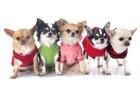 犬服のサイズの測り方や選び方!オススメの通販ショップ3選