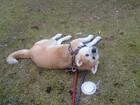 夏の暑い日に来たワンコ ~サービスエリアに捨てられた犬~