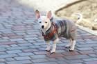犬用ロンパースはデザイン性抜群!おすすめ5選を紹介