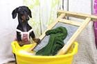 犬用品の洗濯の方法を教えて!頻度や注意点まで